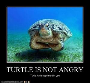 dis-turtle
